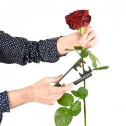 Rózsatövis leszedő csipesz