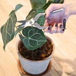 Metszőolló szobanövényekhez