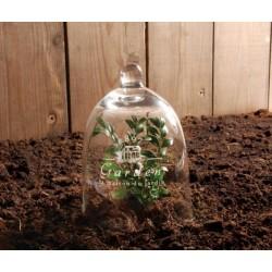 Kerti üvegbúra / növény védő
