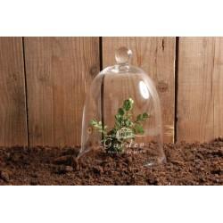 Kerti üvegbúra Nagy / növény védő
